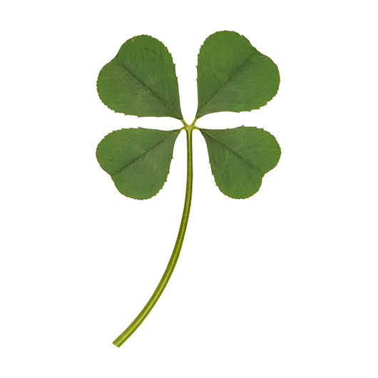 Real 4 Four Leaf Clover Irish Good Luck Charm Wedding Favors Gifts Dry Pressed L